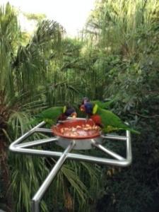 Bird park 4